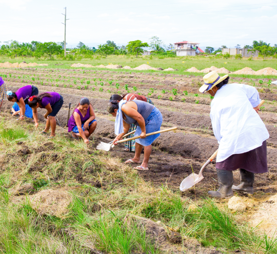 Women workers tending to field